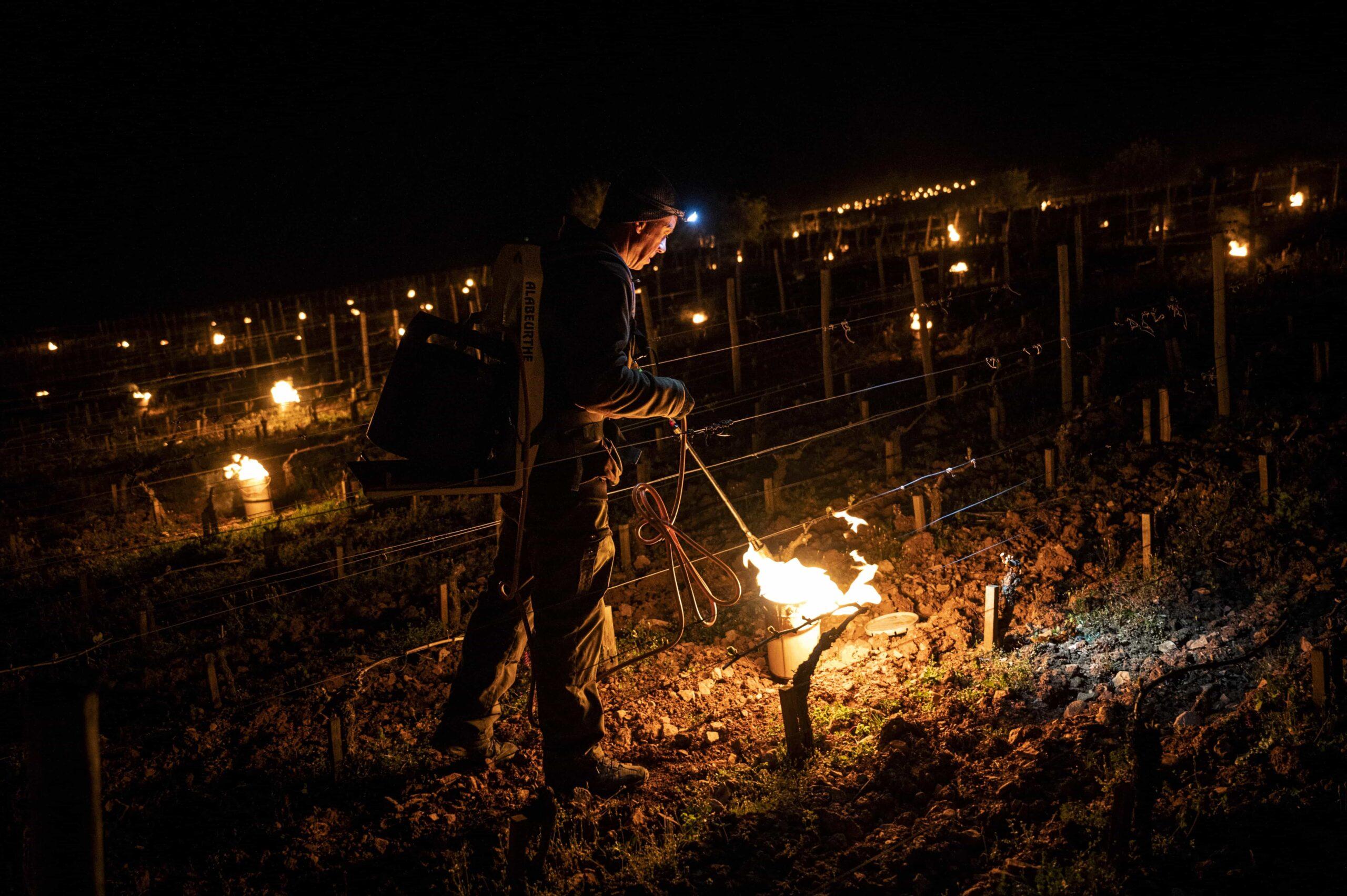 Sauver les vignes, un effort collectif … ou pas !