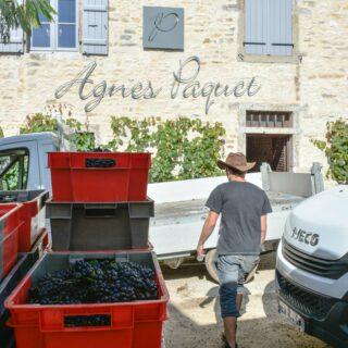 En vendanges chez Agnès Paquet !